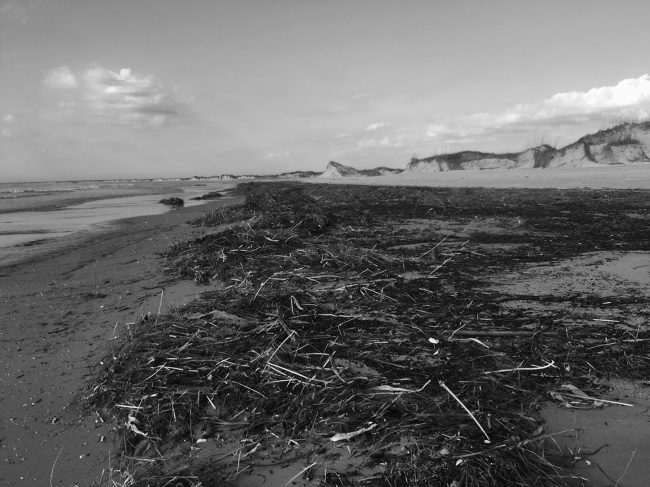 Black-and-white image of Masonboro Island, from ground level across the beach, featuring debris on the sand.