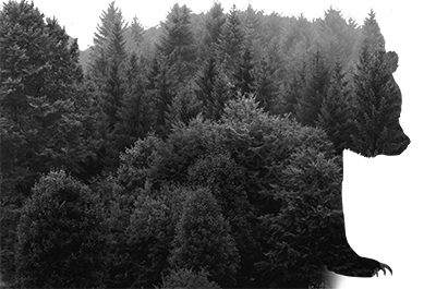 Shape of a bear cut out of a dense pine forest