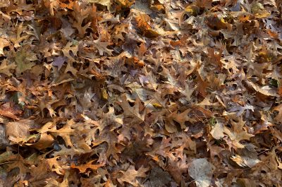 Image description: a close-up view of ground covered in fallen autumn leaves, in varying shades of orange, rust, brown, etc.